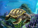 sea-turtle