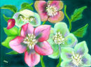 helleborus-orientalis-