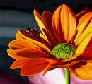 big-orange-flower-and-