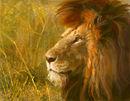 lion-sketch