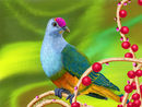 colorful-bird-and-berr